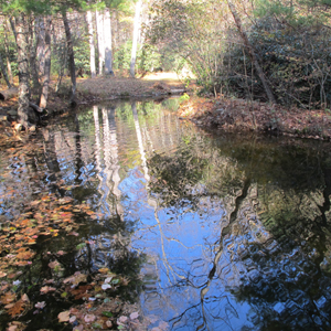 Trout pond