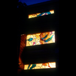 Lit Cattleya windows