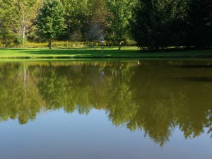Late summer reflection